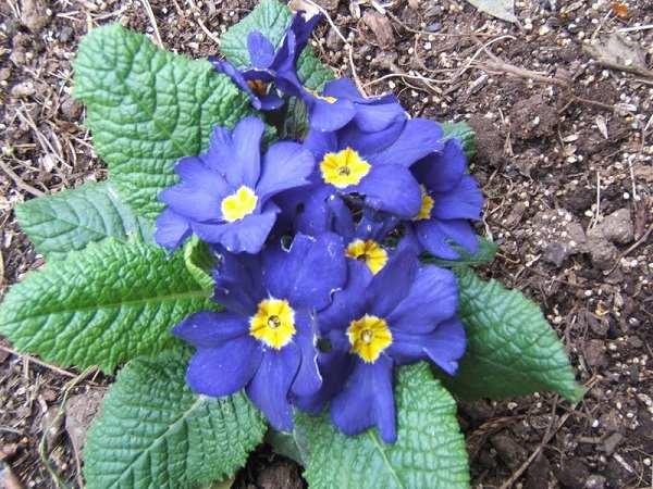cay hoa bao xuan