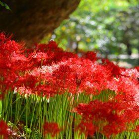 cay hoa bi ngan