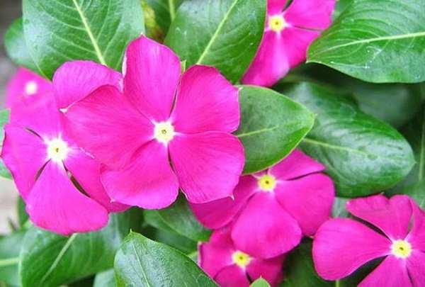 cay hoa dua can