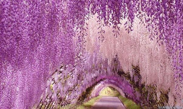 gian hoa tu dang tren hang rao
