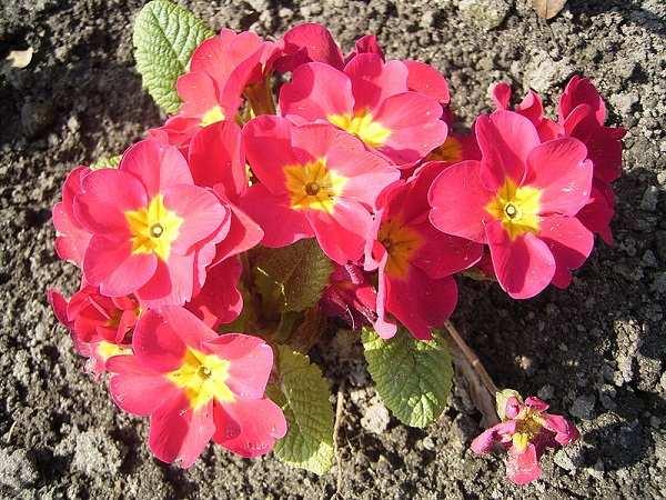 chau hoa bao xuan