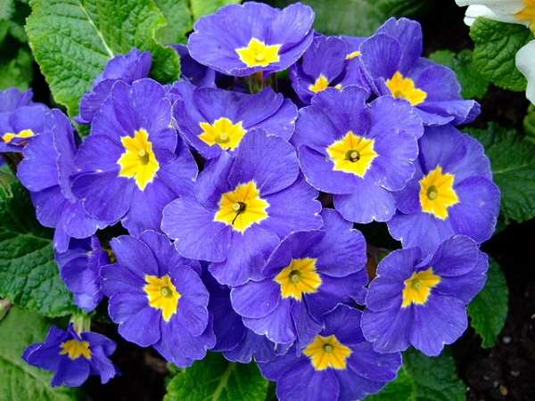 hoa bao xuan dep