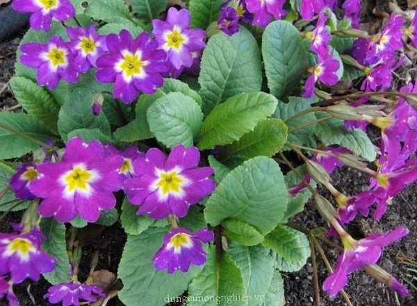 hoa bao xuan y nghia