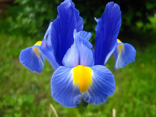 bong hoa vi mau xanh dep