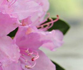 cay hoa do quyen 2