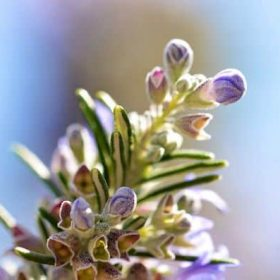 hoa huong thao dep nhat