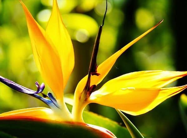 hoa thiên điểu đẹp nhất