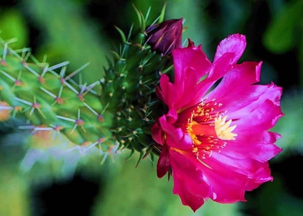 xuong rong no hoa dep