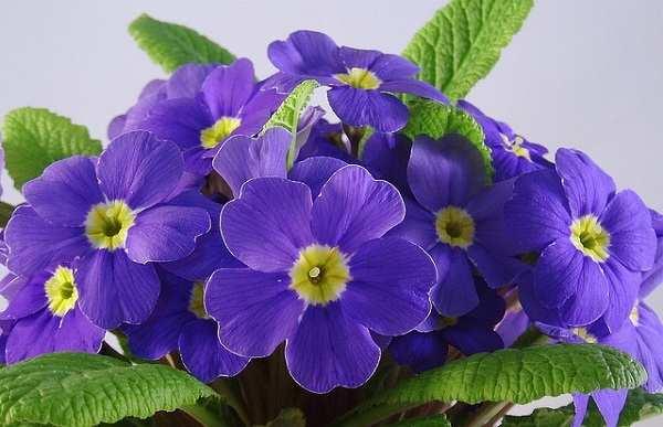 hoa cuc bao xuan