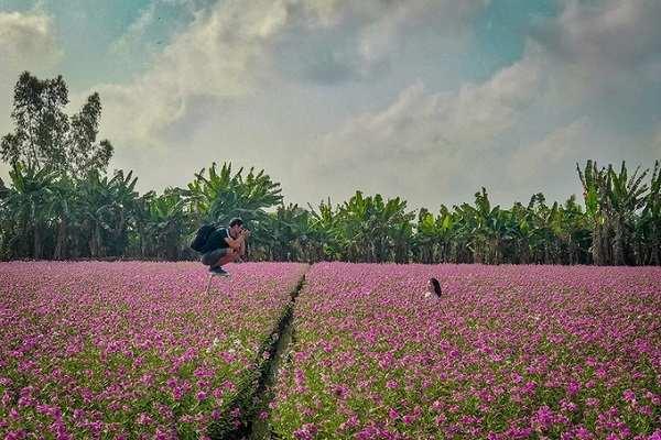 vườn hoa dừa cạn