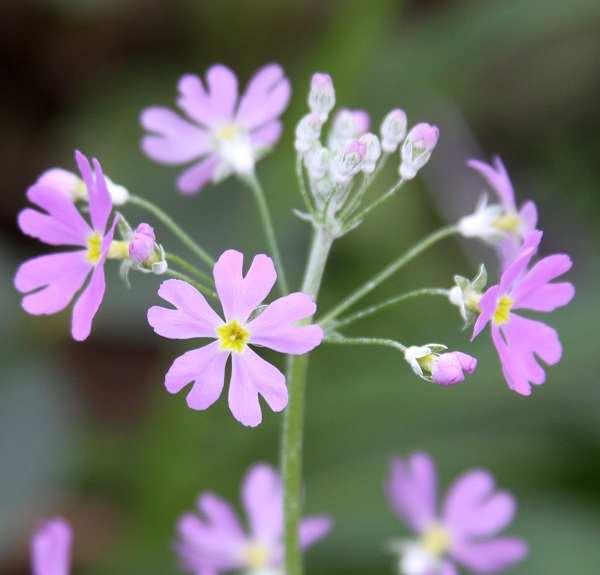y nghia hoa bao xuan