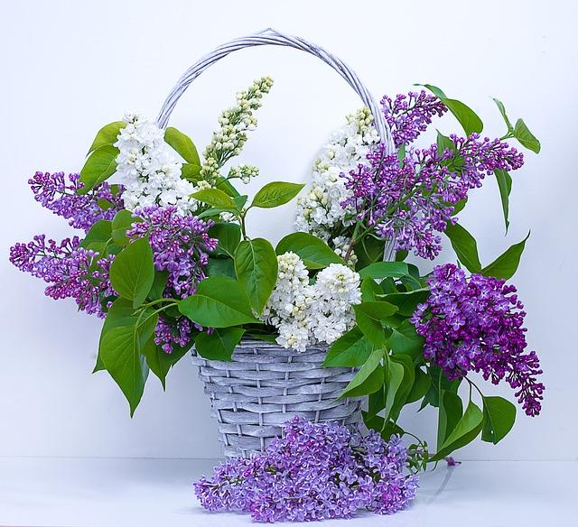 ý nghĩa hoa tử đinh hương