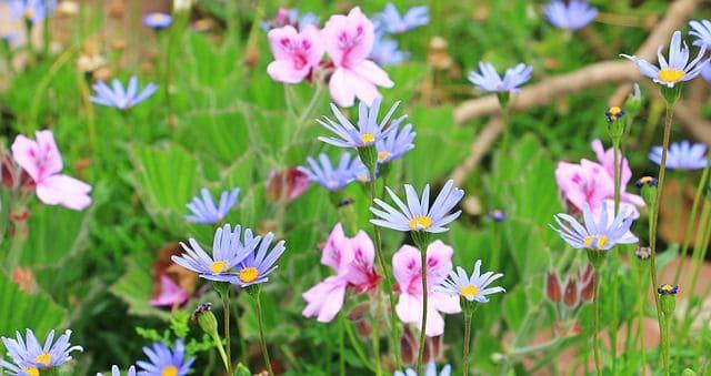 y nghia phong thuy cua hoa cuc