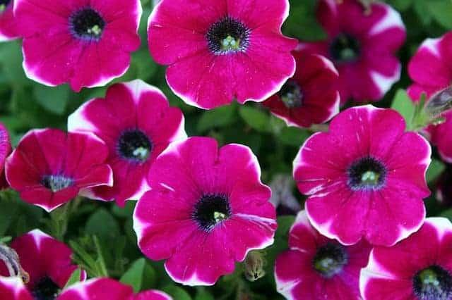 chum hoa da yen thao dep