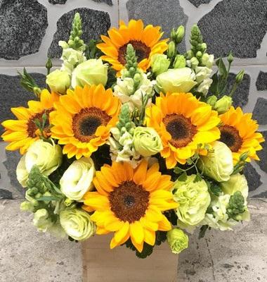 Hoa nắng mai