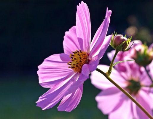 hoa mùa thu