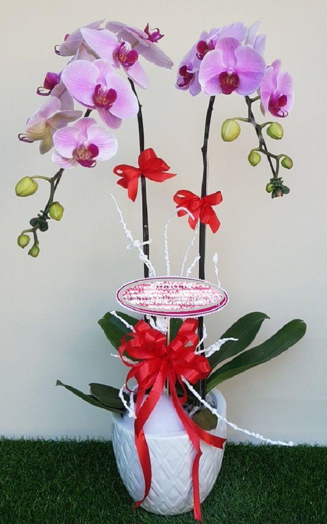 hoa tặng tân gia đẹp