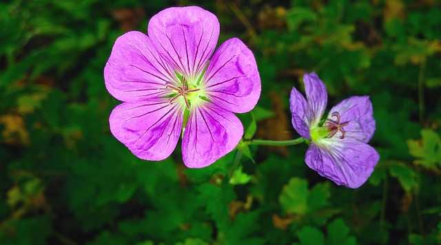 hoa tinh ban phong lu