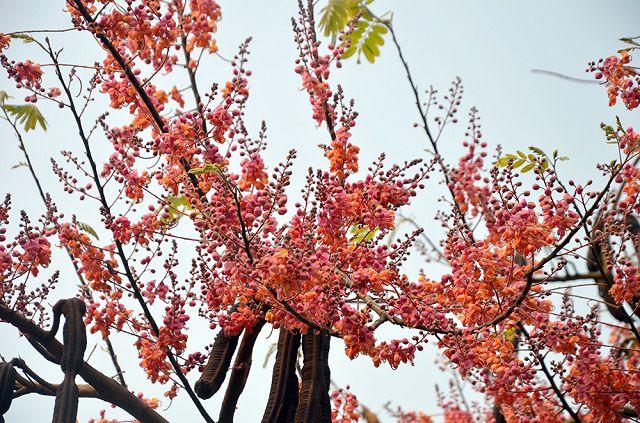 hoa và trái ô môi