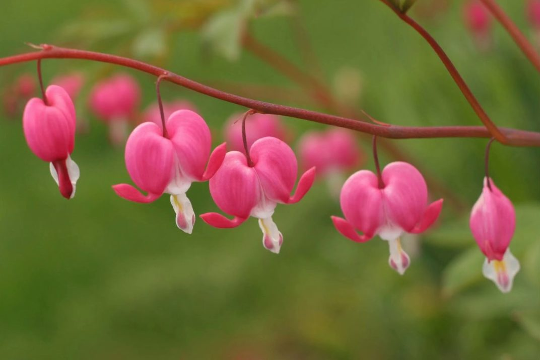 ý nghĩa các loài hoa