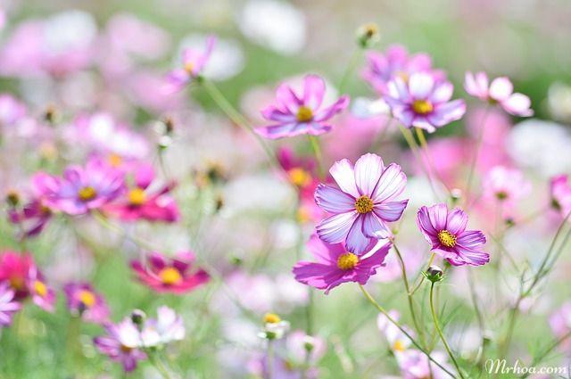 Hình ảnh những loài hoa đẹp trên thế giới