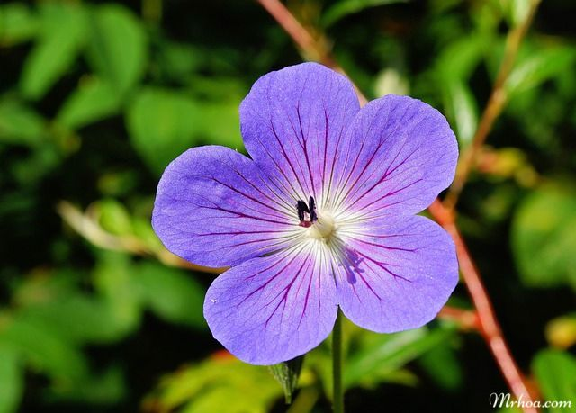 hoa đẹp nhất