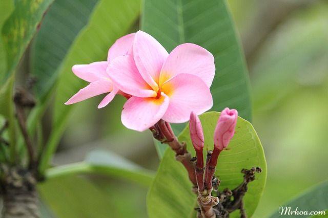 hoa dep hoa dai