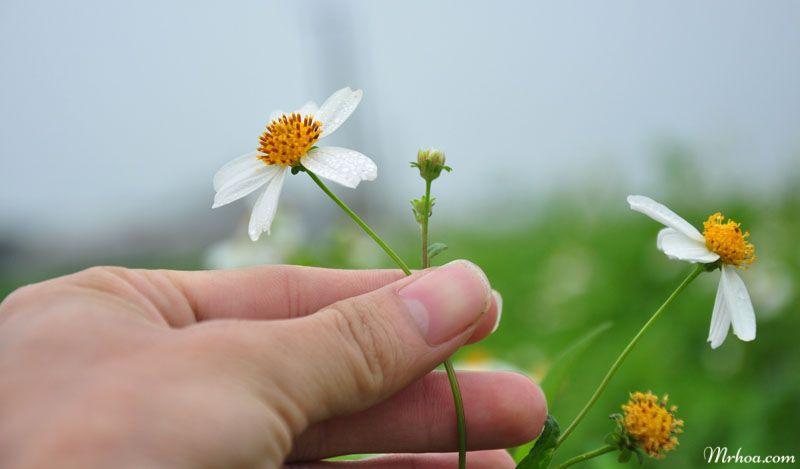 hoa xuyến chi đẹp