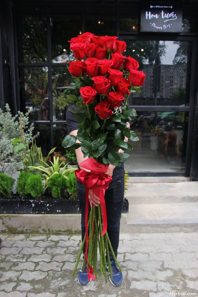 hoa hồng ecuador y nghia