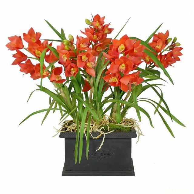 ý nghĩa hoa địa lan