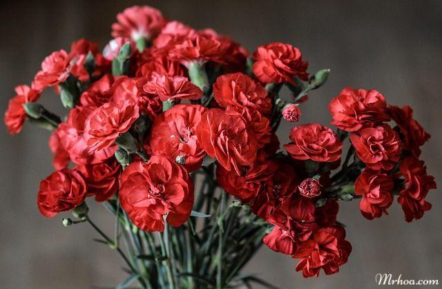Hoa cam chuong tang me