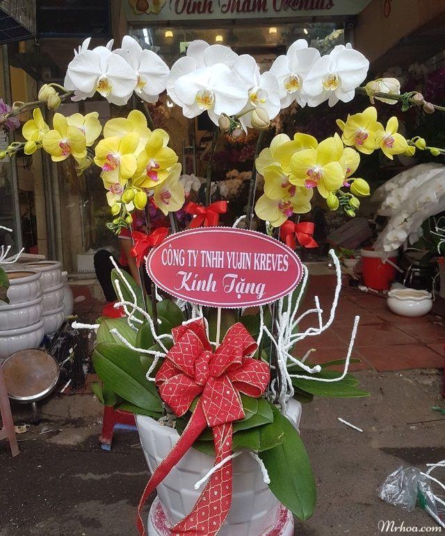 hoa lan tang sinh nhat me