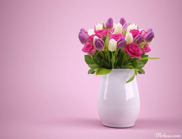 Hoa tulip tang me