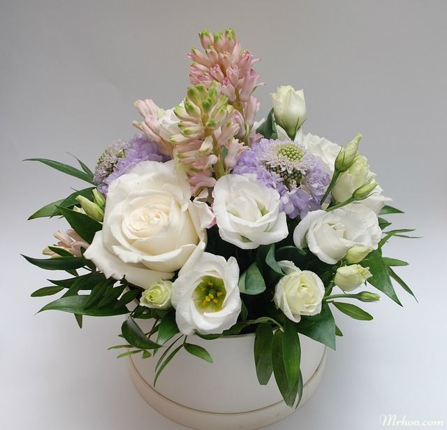 hoa hong trang