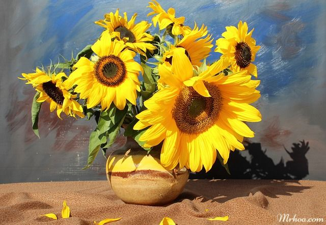 hoa hướng dương tặng sếp nam