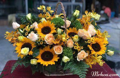 hoa tuoi quang binh