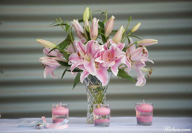 Hoa lily cung kim nguu